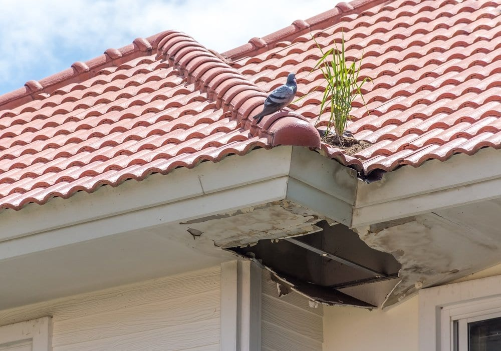 Calgary Roofing Companies | Claw Roofing Specialists Calgary Roofing Company - Claw Roofing - Tile roof mold damage