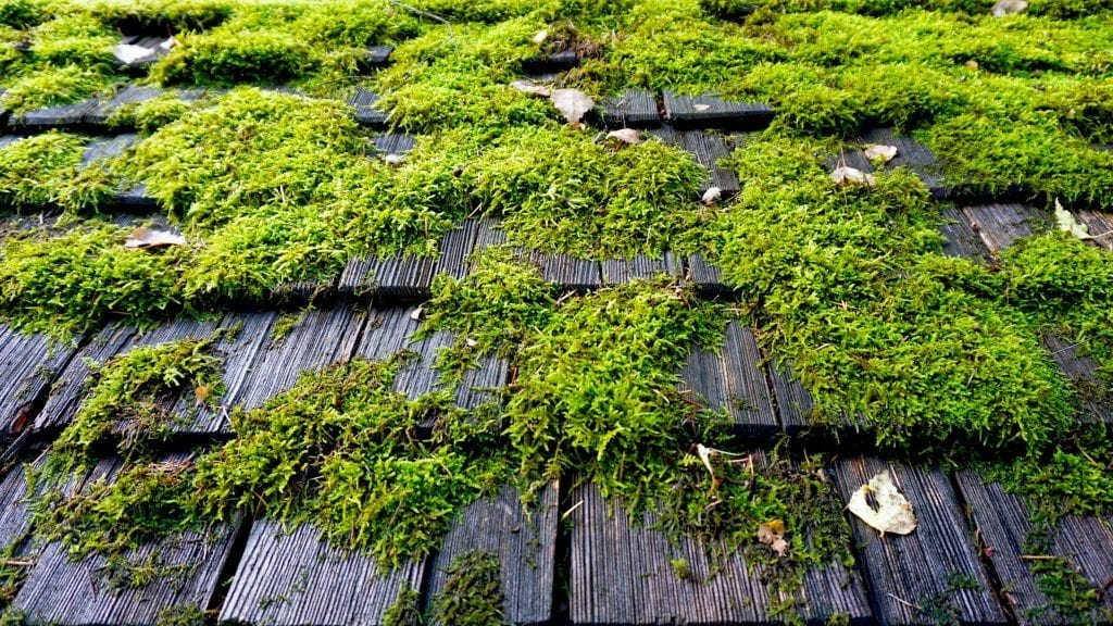 claw roofing calgary roof moss 2